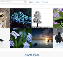 All that is nature - 20 January 2011 by The RedBubble Homepage