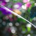Spiderweb by Jennifer Eurell
