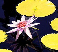 Waterlily summer series by dandefensor