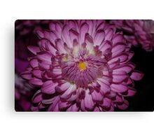 power up and bloom Canvas Print
