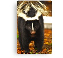 Angry skunk Canvas Print
