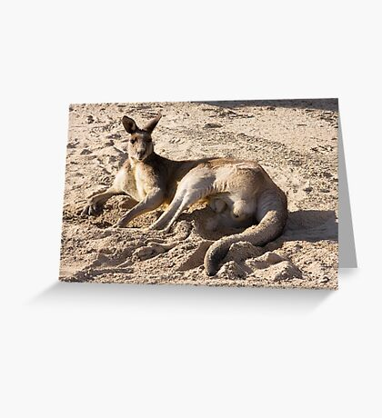 Kangaroo on the golf course Greeting Card