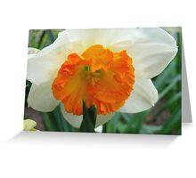 Daffodil Glory Greeting Card