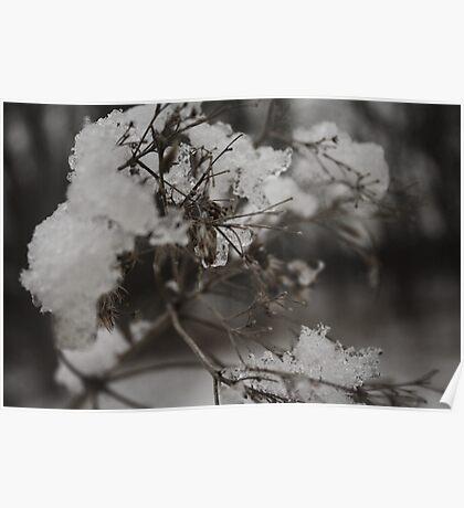 Ice flower  Poster