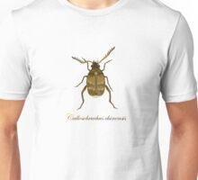 Callosobruchus chinensis - adzuki bean weevil Unisex T-Shirt