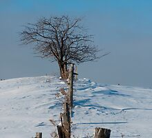 Tree On A Hill In The Snow by Gary Chapple