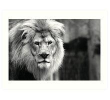 Themba, King of The Milwaukee County Zoo Art Print