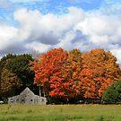 Autumn Sky by Esperanza Gallego