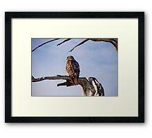 Red Tailed Hawk, Marin Headlands Framed Print
