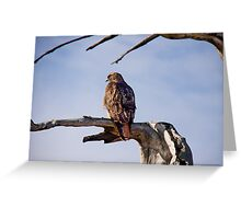 Red Tailed Hawk, Marin Headlands Greeting Card