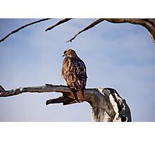 Red Tailed Hawk, Marin Headlands Photographic Print