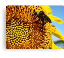 Bumble Bee on a Sunflower Canvas Print