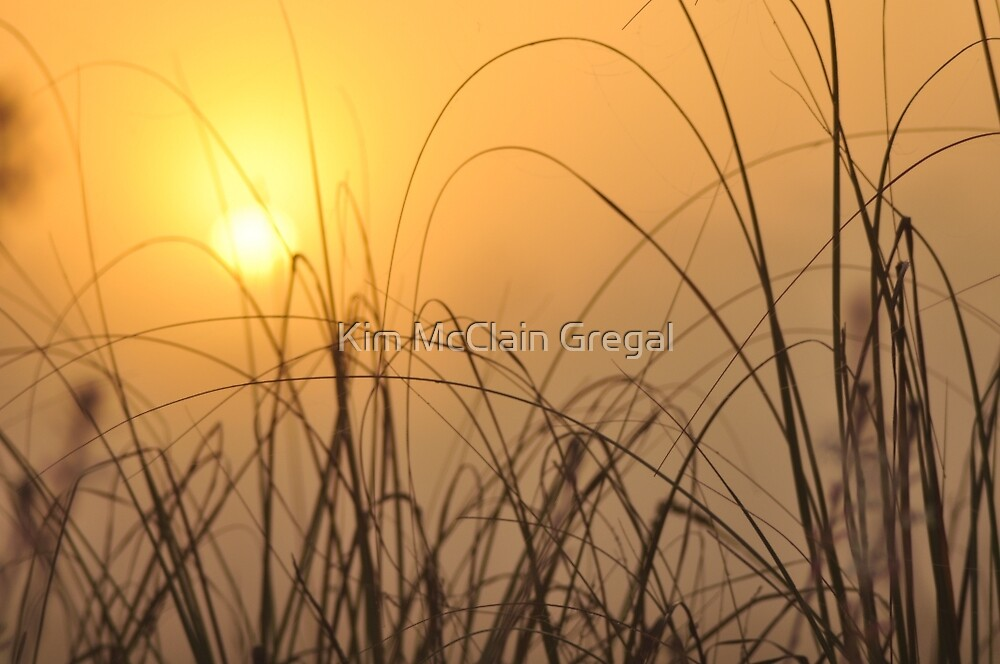 Everglades Sunrise, As Is by Kim McClain Gregal