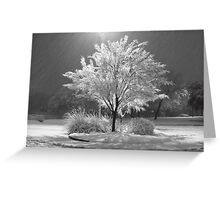 An Ice - Snow covered Tree Greeting Card