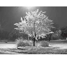 An Ice - Snow covered Tree Photographic Print