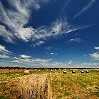 Grass Bales @ Geelong by Ray Yang