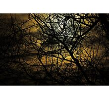 Willow In Moonlight Photographic Print