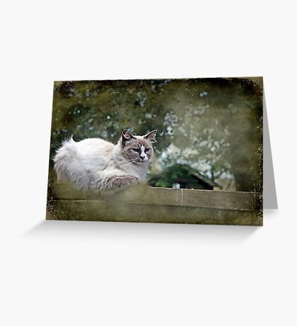 """""""& as they watched him ,JimBob snuggled down """" Greeting Card"""