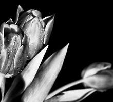 Silver Tulips by Francesco Malpensi