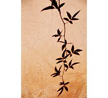 leaves of a wallflower Photographic Print