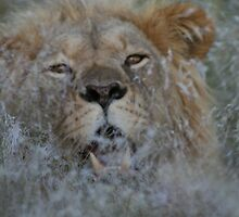 Teeth In The Long Grass by Donald  Mavor