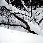 January, 1 by Bluesrose