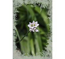 LittleFlower Photographic Print
