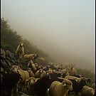 SHEEPS by manumint