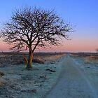 Sunrise Morning, Fochteloerveen in Winter by ienemien