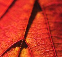 Golden Red Venation by RyanLeePhoto