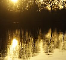 Golden moment - gold colour straight from my camera by Penny V-P