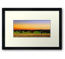 Canola Farm At Dawn Framed Print