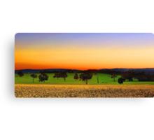 Canola Farm At Dawn Canvas Print