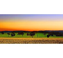 Canola Farm At Dawn Photographic Print