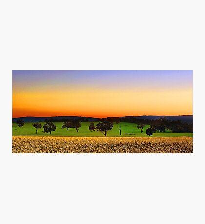 Canola Farm At Dawn Photographic Print