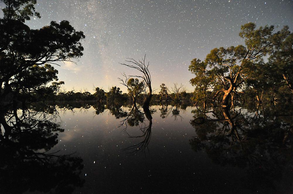 Moonlit Trees by Wayne England