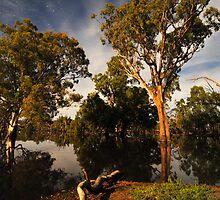 Poocher Moonlight by Wayne England