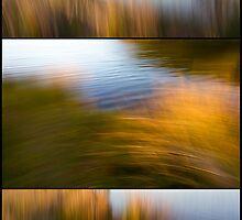 Reed Blur Triptych by pennyswork