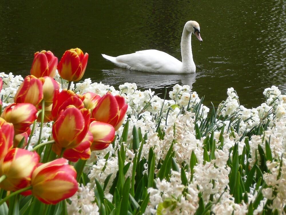 Swimming in Tulips by prmorgan