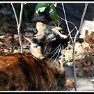 Cat Outside by surlana