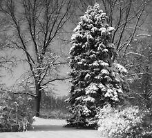 Winter of My Soul by reindeer