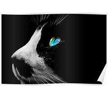 Black Tuxedo cat with Blue eyes Poster