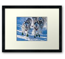 Quest Dogs Framed Print