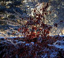 Winter Garden by GerryMac