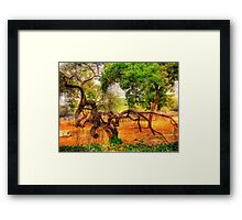 An Old Tree in National Zoo(Delhi) Framed Print