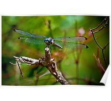Blue Eyed Dragonfly Poster