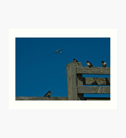 Swallow Flying Lesson Art Print