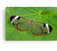 Wings of Glass - Glasswing - Greta oto Canvas Print