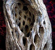 Holey Details by Carla Wick/Jandelle Petters