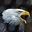 Screaming Bald Eagle by Cycroft